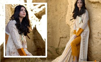 Zunn Spring Summer Lawn Collection